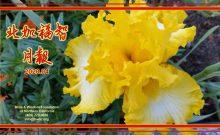 2020/04 北加福智 月報