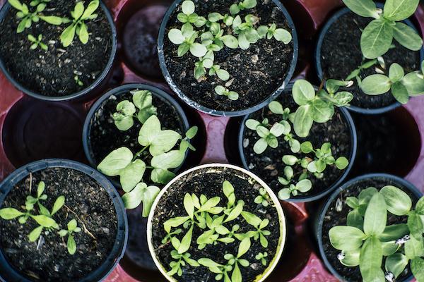 農栽樂系列講座